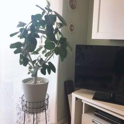 画像 【初心者向け】センス良く部屋にグリーン(植物)を飾るための3つのポイント の記事より 5つ目