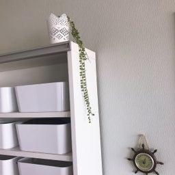 画像 【初心者向け】センス良く部屋にグリーン(植物)を飾るための3つのポイント の記事より 7つ目
