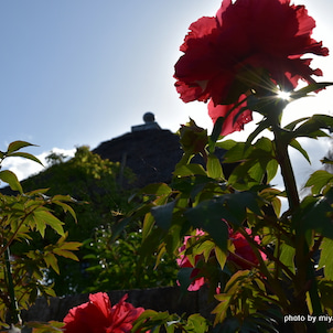 一乗寺花巡り 春のお庭の画像