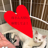 白猫ハクちゃんの子育て日記8の画像