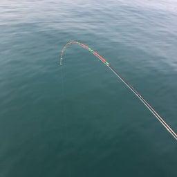 画像 【チヌ・筏】3連釣1日目@熊本県上天草市『つり一』【CHINU男】 の記事より 6つ目