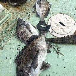 画像 【チヌ・筏】3連釣1日目@熊本県上天草市『つり一』【CHINU男】 の記事より 8つ目