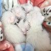 所有者のいない猫の不妊去勢手術、来月の予約始まっていますの画像