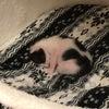 白猫ハクちゃんの子育て日記10の画像