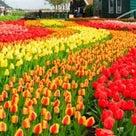 オランダの天気、天候☀️☔️☁️の記事より
