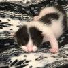 白猫ハクちゃんの子育て日記11の画像