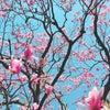 春ですね☆の画像