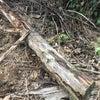 愛知県蒲郡市 令和2年5月4日 今年2回目の羽アリ発生の画像