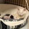 白猫ハクちゃんの子育て日記16の画像