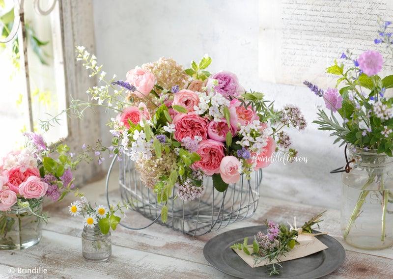 5月の花ローズ