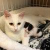 白猫ハクちゃんの子育て日記17の画像