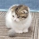 新人猫ちゃん来ました!の記事より