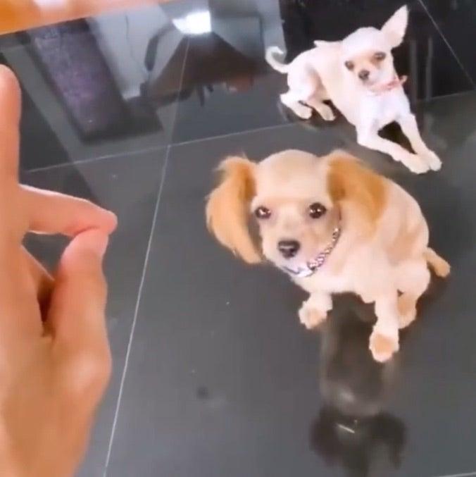 Gackt 犬