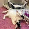 白猫ハクちゃんの子育て日記19の画像