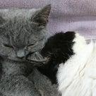 子猫に優しいぱるるくんの記事より