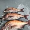 9日釣果の画像