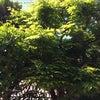 新緑、リ・スタートの季節へ。の画像