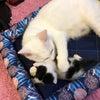 白猫ハクちゃんの子育て日記20の画像