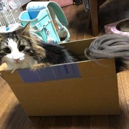 画像 【無事捜索終了】〈レオン〉何処へ… ◎迷子猫探し 札幌市東区 の記事より 6つ目