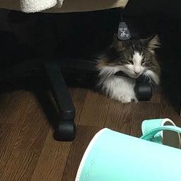 画像 【無事捜索終了】〈レオン〉何処へ… ◎迷子猫探し 札幌市東区 の記事より 5つ目