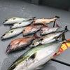 10日釣果の画像