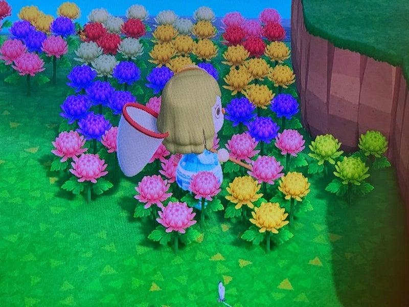 交配 あ の つもり 花