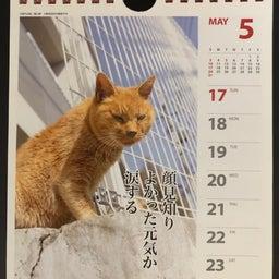 画像 猫カレンダー の記事より 3つ目