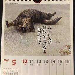 画像 猫カレンダー の記事より 2つ目