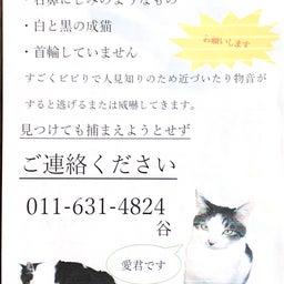 画像 【捜索無事終了!】《愛くん》何処へ・・・◉迷子猫探し 札幌市中央区宮の森より の記事より 1つ目
