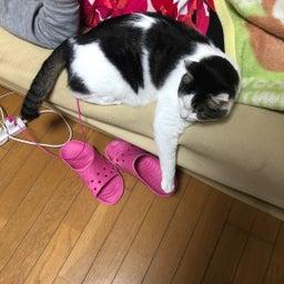 画像 【捜索無事終了!】《愛くん》何処へ・・・◉迷子猫探し 札幌市中央区宮の森より の記事より 5つ目