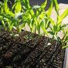 面白い野菜を育てちゃおうの画像