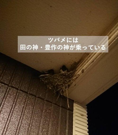 家 巣 作る が つばめ を ツバメの巣がある家は縁起が良い?燕が巣を作る家・玄関の幸運と言い伝えも