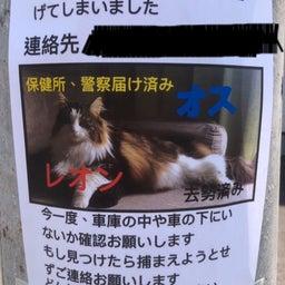 画像 【無事捜索終了】〈レオン〉何処へ… ◎迷子猫探し 札幌市東区 の記事より 1つ目