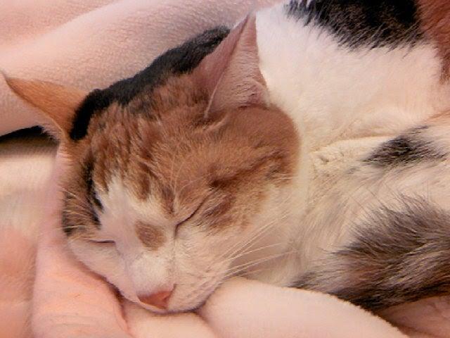 眠るネコの画像