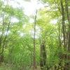 円山に登ってきましたの画像