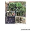 固定種の野菜の画像