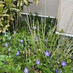 画像 たくさんの花に囲まれて〜ハナちゃん安らかに〜 の記事より 2つ目