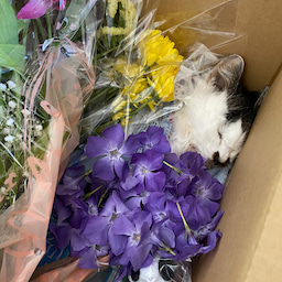画像 たくさんの花に囲まれて〜ハナちゃん安らかに〜 の記事より 3つ目