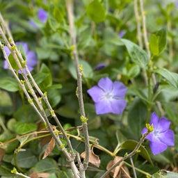 画像 たくさんの花に囲まれて〜ハナちゃん安らかに〜 の記事より 1つ目