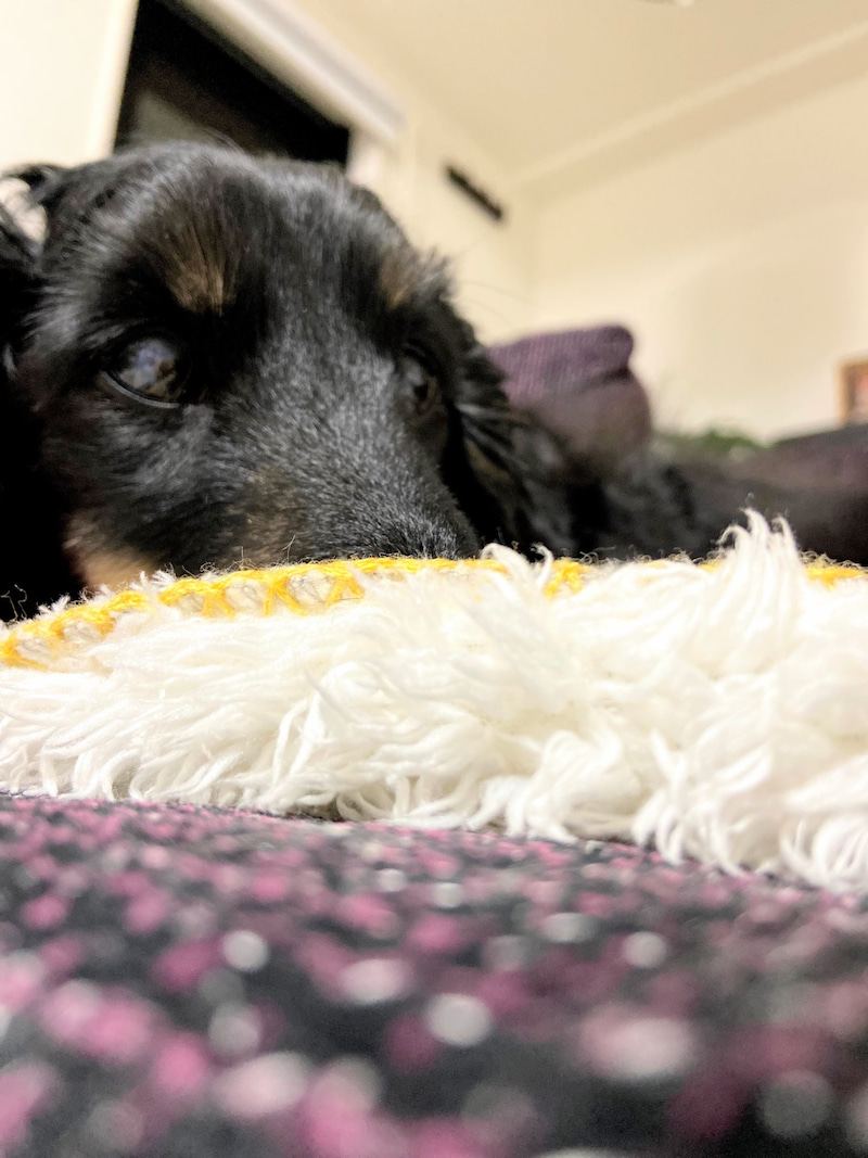 黒い 犬 耳垢