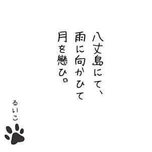 猫紹介2⭐︎の画像