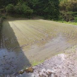 画像 ∵ 田植えが終わったー の記事より 11つ目