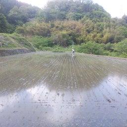 画像 ∵ 田植えが終わったー の記事より 4つ目