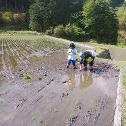 画像 ∵ 田植えが終わったー の記事より 6つ目