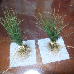 画像 ∵ 苗を進ぜる の記事より 1つ目