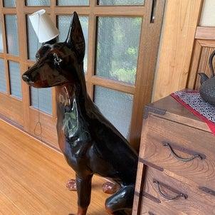 うちの番犬の画像