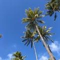 オトナ女子、アラフォーライフ〜ハワイとヨガとstaubが好き。