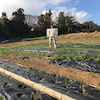 素人の野菜農家は島で食べていけるのか? 第十三話の画像