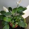 HATTORIの日常 癒しの植物編の画像