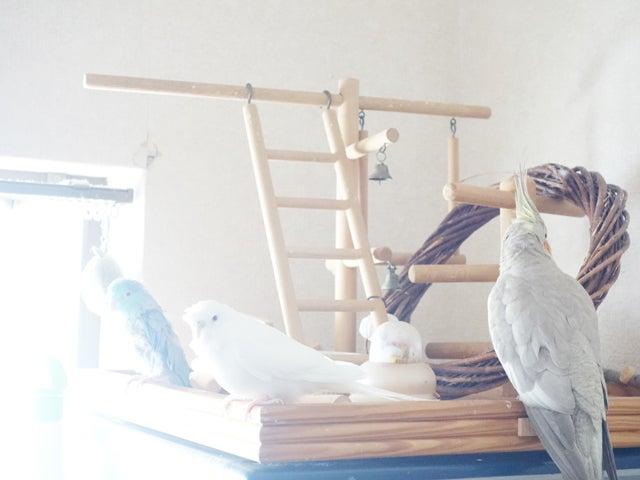 レキとレティとレミィ
